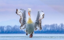 GANADORES DEL BIRD PHOTOGRAPHER OF THE YEAR 2019