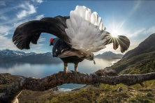 GANADORES DEL BIGPICTURE NATURAL WORLD PHOTOGRAPHY COMPETITION 2019